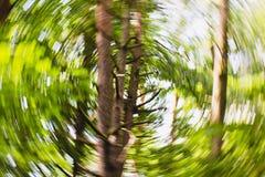 Υπνωτική μουτζουρωμένη επίδραση κύκλων Defocused δασική στοκ φωτογραφία
