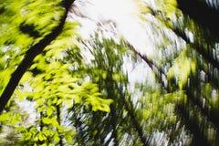 Υπνωτική μουτζουρωμένη επίδραση κύκλων Defocused δασική στοκ φωτογραφίες με δικαίωμα ελεύθερης χρήσης
