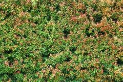 Υποβάθρου ταπετσαριών πράσινο σχέδιο σύστασης φύλλων φυσικό Στοκ Εικόνα