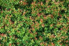 Υποβάθρου ταπετσαριών πράσινο σχέδιο σύστασης φύλλων φυσικό Στοκ Εικόνες
