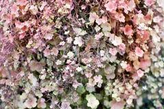 Υποβάλτε προσφορά λίγα ρόδινοι και πράσινοι μωβ στενοί επάνω μακρο ορειβάτες σύστασης υποβάθρου φύλλων και λουλουδιών, gillyflowe στοκ φωτογραφία