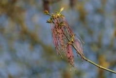 Υποβάλτε προσφορά λίγα φύλλα και τα λουλούδια σε έναν κλάδο δέντρων Στοκ εικόνα με δικαίωμα ελεύθερης χρήσης