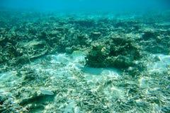 Υποβρύχια άποψη των νεκρών κοραλλιογενών υφάλων και των όμορφων ψαριών Κολύμβηση με αναπνευστήρα, Ινδικός Ωκεανός Στοκ εικόνες με δικαίωμα ελεύθερης χρήσης