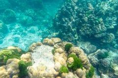Υποβρύχια άποψη των ψαριών κοραλλιών Στοκ Εικόνες