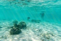 Υποβρύχια άποψη ψαριών θάλασσας και snorkeler Στοκ φωτογραφίες με δικαίωμα ελεύθερης χρήσης