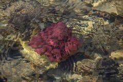 Ζωηρόχρωμη υποβρύχια ζωή Υποβρύχια αφηρημένη σύσταση στοκ φωτογραφίες με δικαίωμα ελεύθερης χρήσης