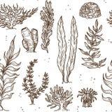 Υποβρύχια εγκαταστάσεις φυκιών και κοράλλια ή σφουγγάρια απεικόνιση αποθεμάτων