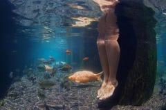 Υποβρύχια εικόνα των θηλυκών ποδιών και των ψαριών koi στη λίμνη Στοκ Εικόνα