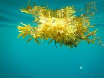 Υποβρύχια ζωή, Φιλιππίνες Στοκ Εικόνες