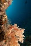 Υποβρύχια ζωή στοκ εικόνες
