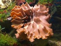 Υποβρύχια ζωή Στοκ εικόνα με δικαίωμα ελεύθερης χρήσης