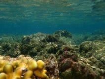 Υποβρύχια θαλάσσια ζωή και τοπίο Στοκ Φωτογραφίες