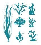 Υποβρύχια κοράλλια θάλασσας και διανυσματικές σκιαγραφίες αλγών στο λευκό απεικόνιση αποθεμάτων
