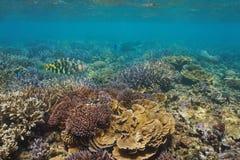 Υποβρύχια κοραλλιογενής ύφαλος με τα τροπικά ψάρια Ωκεανία Στοκ φωτογραφίες με δικαίωμα ελεύθερης χρήσης