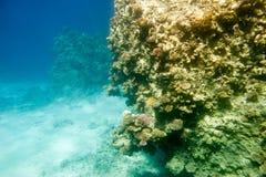 Υποβρύχια κοραλλιογενής ύφαλος Στοκ φωτογραφίες με δικαίωμα ελεύθερης χρήσης