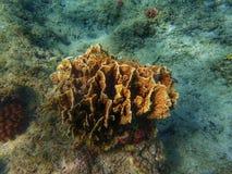 Υποβρύχια παγκόσμια κοράλλια Στοκ Φωτογραφία