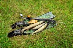 _ Υποβρύχια πυροβόλο όπλο, πτερύγια και ψάρια στη χλόη επάνω στοκ εικόνα με δικαίωμα ελεύθερης χρήσης