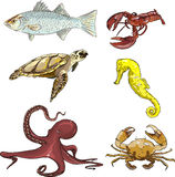 Υποβρύχια πλάσματα Στοκ εικόνες με δικαίωμα ελεύθερης χρήσης