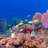 Υποβρύχια σκηνή με ένα κοπάδι των κίτρινων τροπικών ψαριών στοκ εικόνες με δικαίωμα ελεύθερης χρήσης