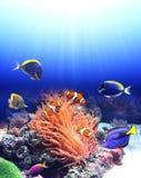 Υποβρύχια σκηνή με τα τροπικά ψάρια Στοκ Εικόνες