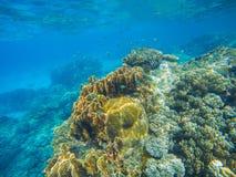 Υποβρύχια σκηνή με την κοραλλιογενή ύφαλο Μεγάλα κοράλλια με τα μικρά ψάρια Στοκ φωτογραφία με δικαίωμα ελεύθερης χρήσης