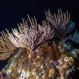 Υποβρύχια σκηνή νύχτας με τα πολύχρωμα σκληρά κοράλλια στοκ φωτογραφία με δικαίωμα ελεύθερης χρήσης