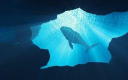 Υποβρύχια σκηνή της φάλαινας βαθιά διανυσματική απεικόνιση