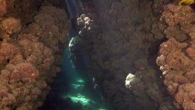 Υποβρύχια σπηλιά με τη συμπαθητική ελαφριά προέλευση ήλιων από την επιφάνεια απόθεμα βίντεο