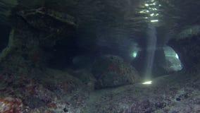 Υποβρύχια σπηλιά απόθεμα βίντεο