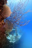 υποβρύχια συντρίμμια τιμών &Al Στοκ Φωτογραφία