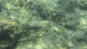 Υποβρύχια σύσταση και πανίδα στην ιόνια θάλασσα, Ζάκυνθος, Ελλάδα απόθεμα βίντεο