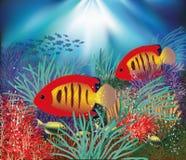 Υποβρύχια ταπετσαρία με τα τροπικά ψάρια Στοκ Εικόνα