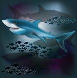 Υποβρύχια ταπετσαρία με τον άσπρο καρχαρία, διάνυσμα Στοκ Φωτογραφία