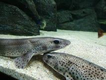 Υποβρύχια ψάρια Στοκ Εικόνες