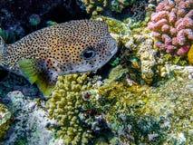 Υποβρύχια ψάρια Στοκ φωτογραφίες με δικαίωμα ελεύθερης χρήσης
