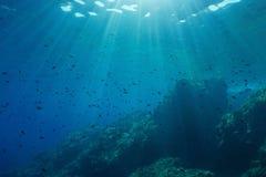 Υποβρύχια seascape Μεσόγειος Στοκ Εικόνες
