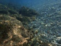 Υποβρύχιοι πέτρες σκοπέλων και οργανισμοί κοραλλιών Στοκ εικόνα με δικαίωμα ελεύθερης χρήσης