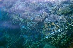 Υποβρύχιοι σκόπελος και αλυσίδες Στοκ εικόνα με δικαίωμα ελεύθερης χρήσης