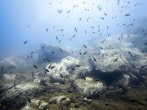 Υποβρύχιοι σκόπελος πυθμένων της θάλασσας και σχολείο των ψαριών στοκ εικόνες