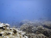 Υποβρύχιοι σκόπελος πυθμένων της θάλασσας και σχολείο των ψαριών στοκ φωτογραφία
