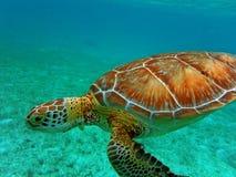 Υποβρύχιος Ειρηνικός Ωκεανός άποψης χελωνών κολυμπώντας Στοκ Φωτογραφία