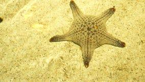Υποβρύχιος κόσμος, αστερίας κάτω από το σαφές νερό στα ρηχά νερά κάτω από τις ακτίνες του ήλιου στοκ φωτογραφίες