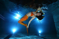 υποβρύχιος κόσμος ιστορίας σειρήνων θάλασσας γοργόνων νεράιδων Στοκ Εικόνες