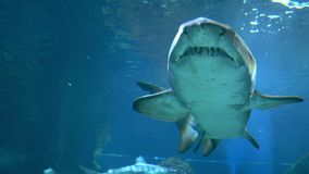 Υποβρύχιος κόσμος, κολύμβηση καρχαριών υποβρύχια αρπακτικά ζώα κινηματογραφήσεων σε πρώτο πλάνο στοκ εικόνες