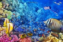 Υποβρύχιος κόσμος με τα κοράλλια και τα τροπικά ψάρια Στοκ φωτογραφία με δικαίωμα ελεύθερης χρήσης