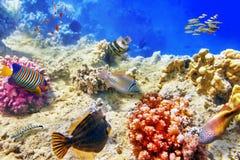 Υποβρύχιος κόσμος με τα κοράλλια και τα τροπικά ψάρια Στοκ Εικόνα