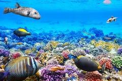 Υποβρύχιος κόσμος με τα κοράλλια και τα τροπικά ψάρια Στοκ εικόνα με δικαίωμα ελεύθερης χρήσης