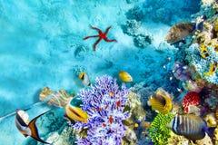 Υποβρύχιος κόσμος με τα κοράλλια και τα τροπικά ψάρια Στοκ φωτογραφίες με δικαίωμα ελεύθερης χρήσης