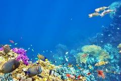 Υποβρύχιος κόσμος με τα κοράλλια και τα τροπικά ψάρια Στοκ εικόνες με δικαίωμα ελεύθερης χρήσης
