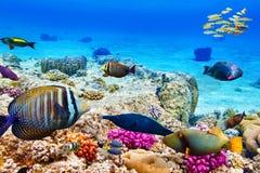 Υποβρύχιος κόσμος με τα κοράλλια και τα τροπικά ψάρια Στοκ Φωτογραφία